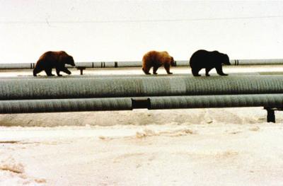 Pipeline Bears