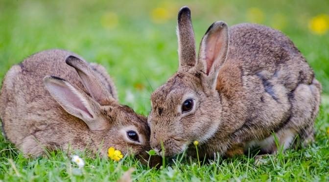 Easter Day Musings