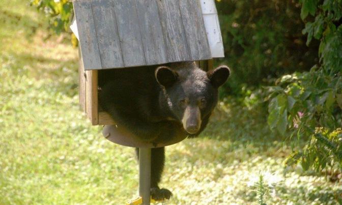 Adirondack Bear Tale #5: Black Bears and Birds