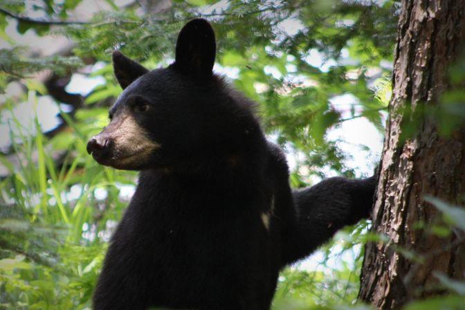 Aunt Betty swats a black bear