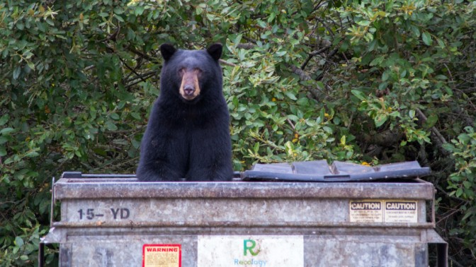 Adirondack Bear Tale #9: A Trip to the Laundromat!