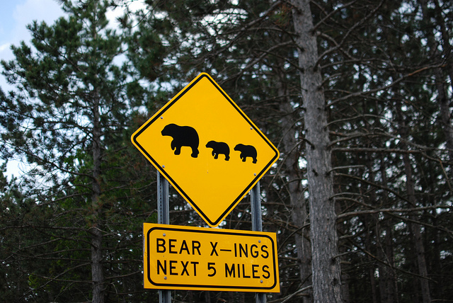 Adirondack Bear Tale #10: The Bear Trap