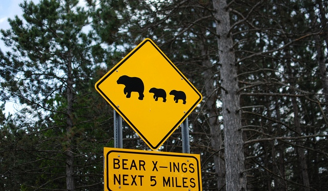 Adirondack Bear Tale #10: The Bear Trap