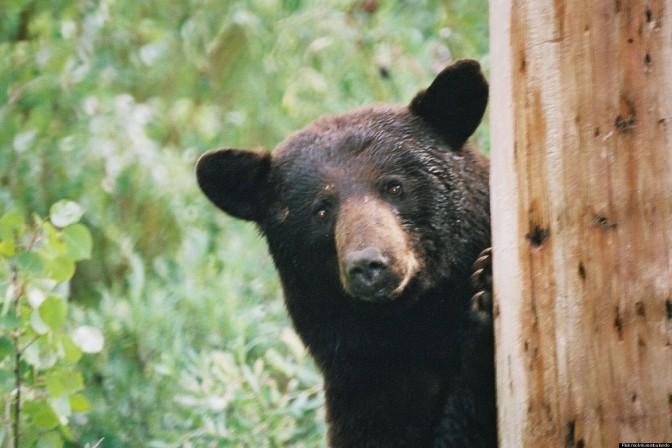 one lucky bear